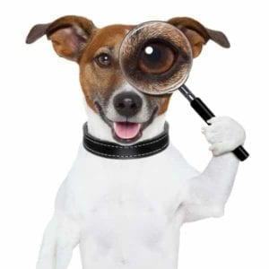 Dog holding a magnifying glass to one eye like a private detective searching through public divorce records.
