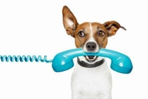 Terrier with a blue old-fashioned telephone receiver in its mouth.