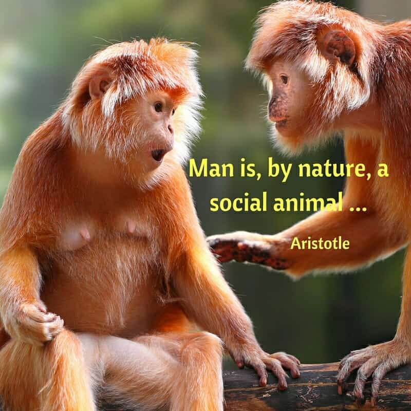 Two monkeys in a tree, talking. Man is a social animal.