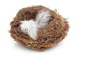 Empty nest with a white feather in it.