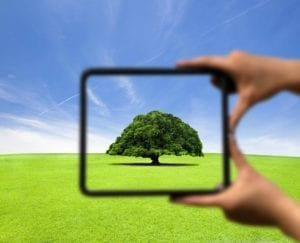 Blurry picture with hands holding a frame. Inside is a clear picture of a tree in focus.