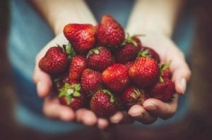 Hands holding out luscious ripe strawberries