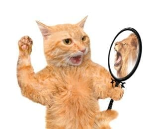Cat looking into the mirror and seeing a reflection of a lion. Narcissist.