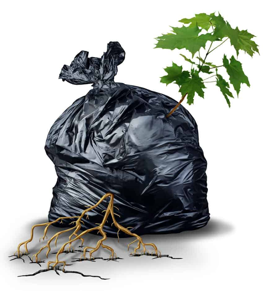 A green sapling tree with leaves and roots bursting out and breaking through from a garbage bag as a metaphor for resilience and determination.