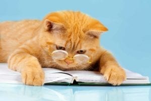 Cat with glasses reading a book of Divorce Resources