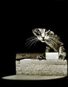Cat with mousetrap and cheese waiting in front of mouse hole. Signifies divorce strategies of trapping your ex.