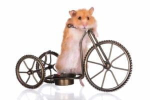 Hamster on a small, 3 wheel bike