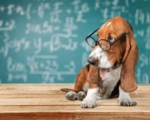 "Dog with glasses in front of chalkboard with equations wondering ""What are the facts?"""
