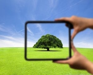 Hands holding a frame. The tree inside the frame is clear. Everything outside the frame is blurry. Reframe.