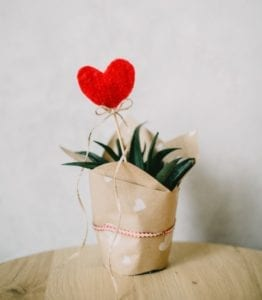 Red heart on a stick in a succulent plant showing how to celebrate Valentine's Day alone.
